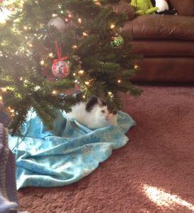 Bunny at Christmas