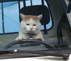 catdriving