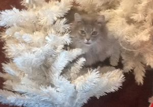 Fluffy at Christmas, about 6 years ago.